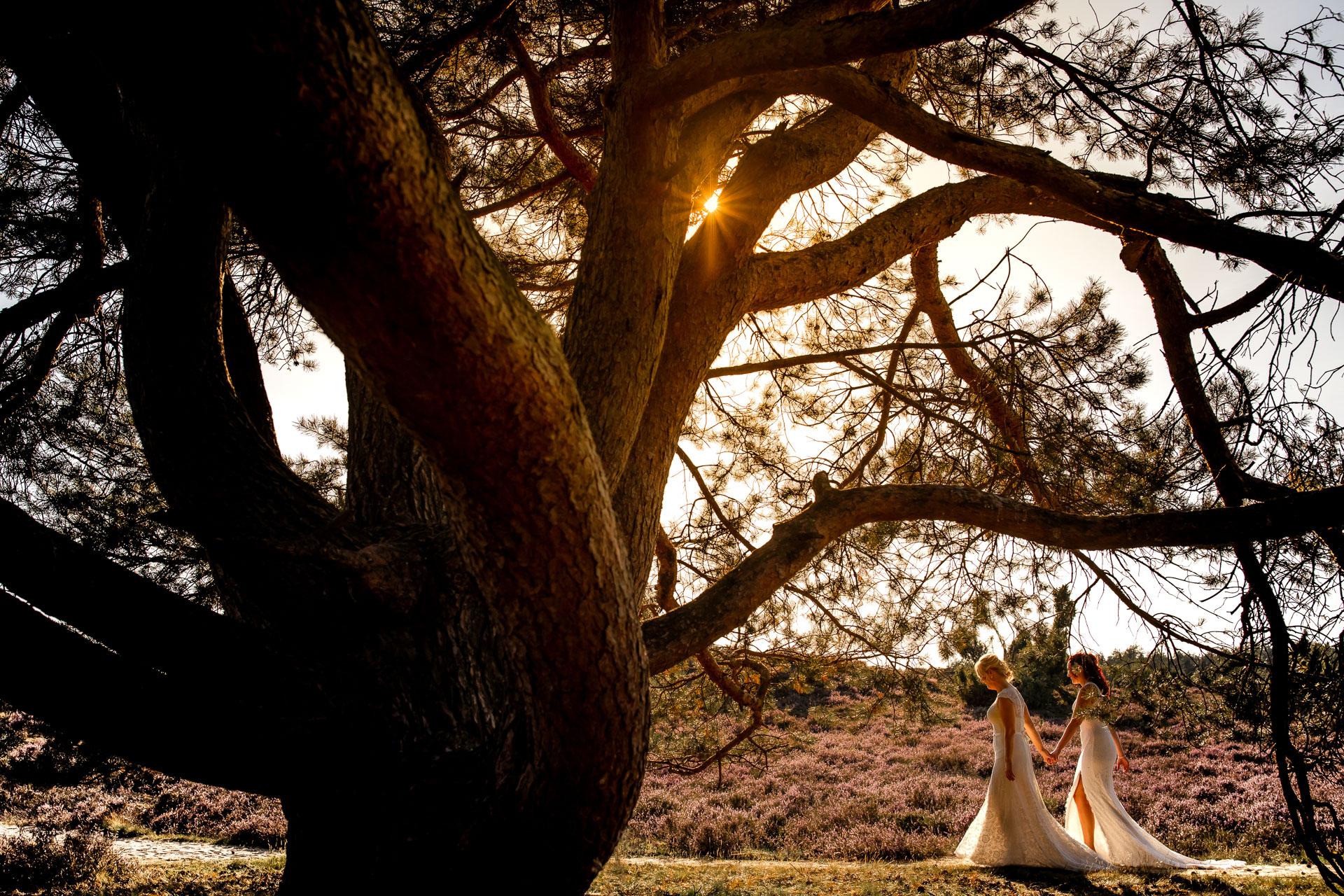 Fotoshoot Heide